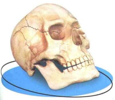 Skull used to smoke marijuana